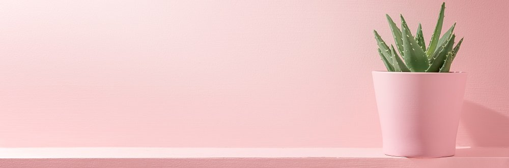 Paralegals milennial pink